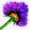Oversized Firey Purple Flower Graphic5x5res72 to 48x48