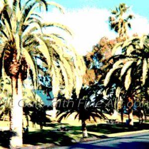 Palm Park View