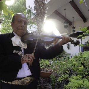 The Violinist's Serenade