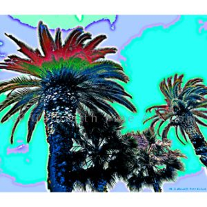 Aqua Palm Tops